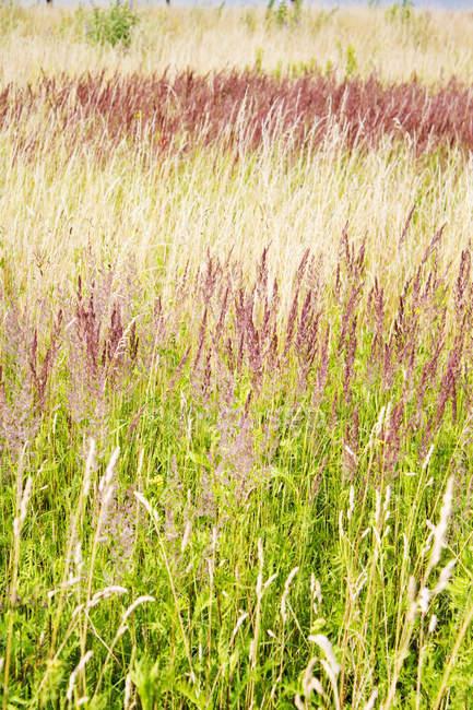 Зеленая трава и другие растения в дневное время — стоковое фото