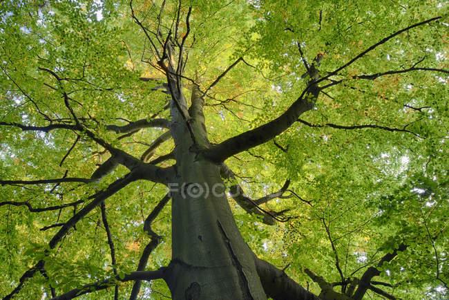 Arbre) en forêt, Suisse saxonne — Photo de stock