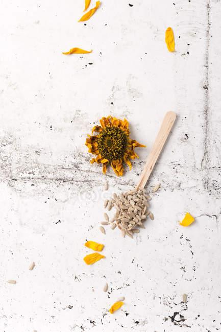 Semi di girasole e semi di girasole secchi sul cucchiaio di legno — Foto stock