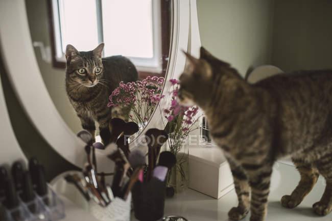 Tabby cat standing on vanity — Stock Photo