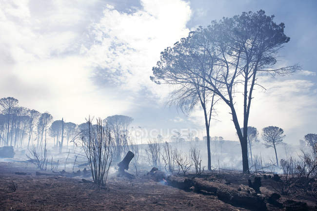 South Africa, Stellenbosch, devastated land after a bushfire — Stock Photo