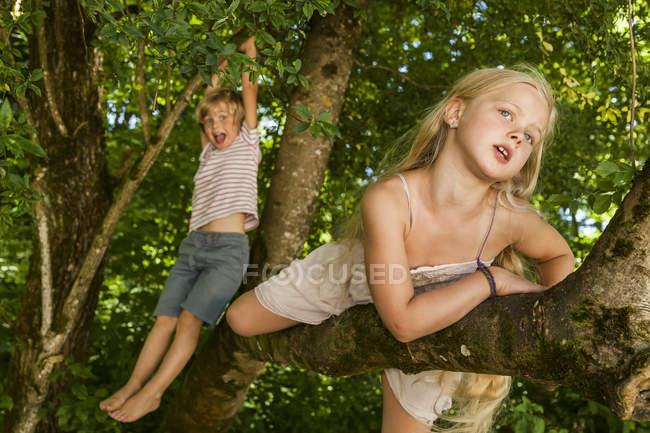 Kleiner Junge und seine Schwester klettern auf einen Baum im Wald — Stockfoto