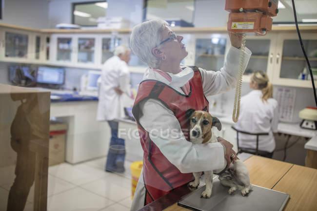 Mujer preparando un perro para rayos X - foto de stock