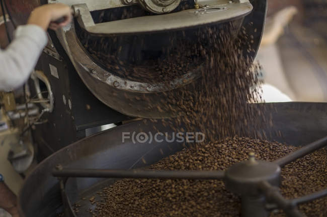 Coffee beans being poured in cooling cylinder — Stock Photo