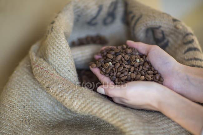 Manos femeninas sosteniendo puñado de granos de café y saco - foto de stock