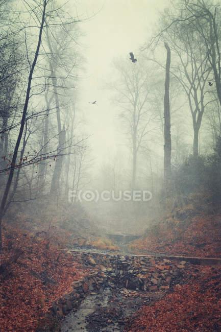 Лес в конце зимы — стоковое фото