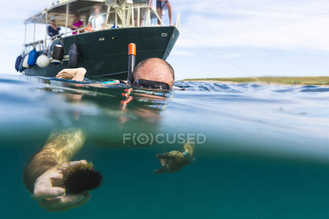 Senior man snorkeling and holding sea urchin — Stock Photo