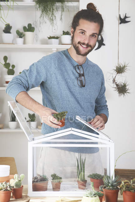 Man putting cacti and succulents in a small greenhouse — Stock Photo