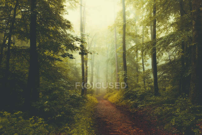 View of Forest in foggy weather — Stock Photo
