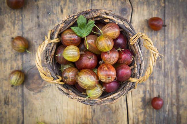 Cestino di vimini di uva spina rossa — Foto stock