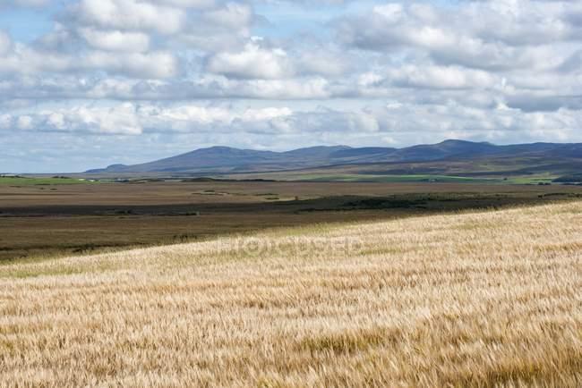 Insel der Insel, Gerstenfelder, innere Hebriden, Schottland, vereinigtes Königreich — Stockfoto