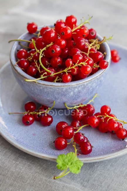 Чаша из красной смородины — стоковое фото