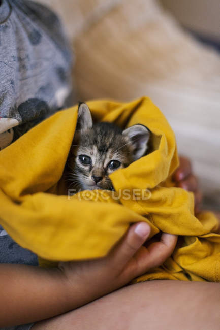 Kid holding tabby kitten covered with yellow blanket — Stock Photo