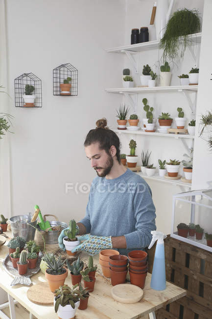 Молодой человек, пересадка кактусов в своей студии — стоковое фото