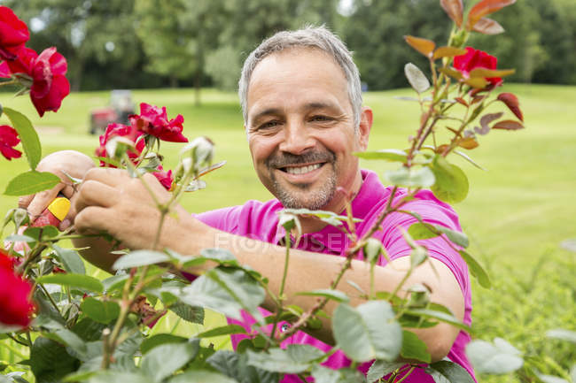 Man caring for roses in garden — Stock Photo