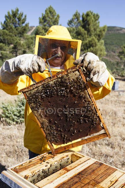 Imker im Schutzanzug mit Bienenwabe — Stockfoto