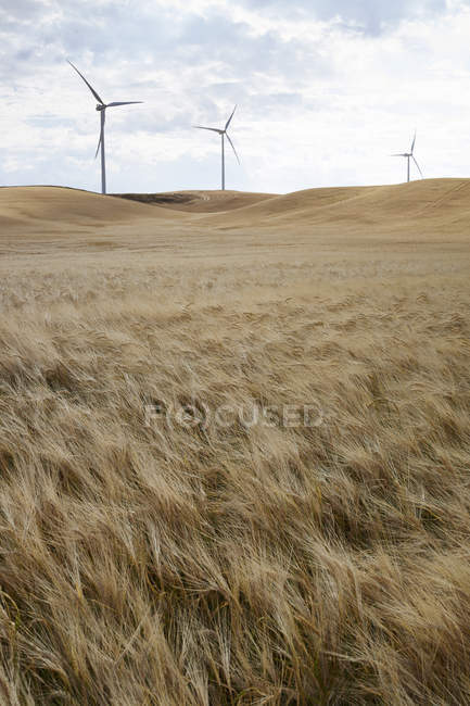 Palouse Hills and wind turbine on background, Washington State, Estados Unidos da América — Fotografia de Stock