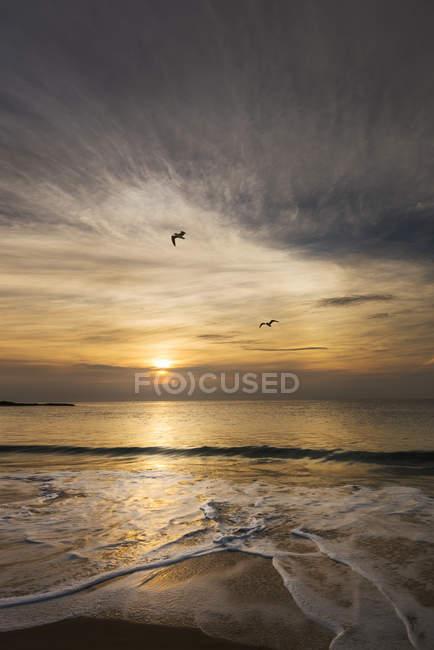Gabbiani e sole serale — Foto stock