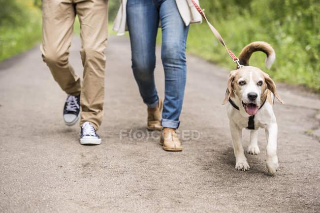 Coppia a passeggio con cane nella natura — Foto stock