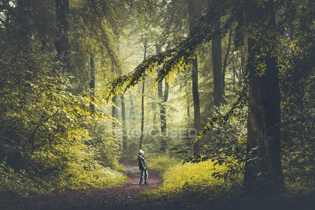 Man looking up on green forest path — Stock Photo