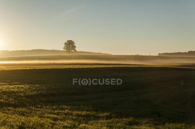 Пейзаж с одним деревом в утренней дымке — стоковое фото