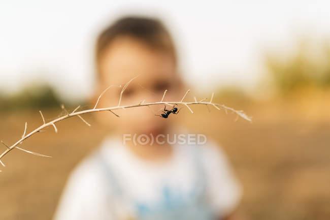 Закри мураха висить на гілці з маленьким хлопчиком на тлі — стокове фото