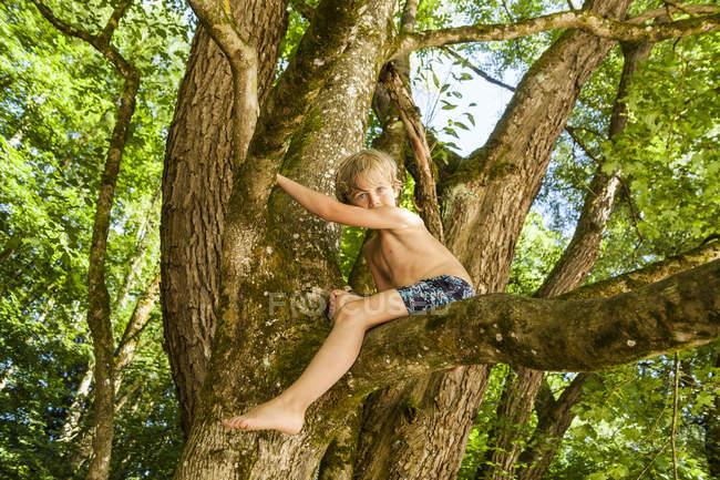 Мальчик залезает на дерево в лесу — стоковое фото