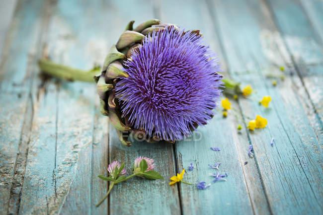 Artichoke blossom on blue wood — Stock Photo