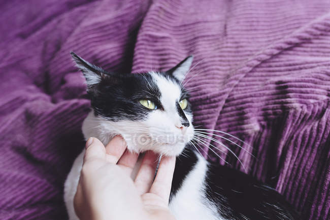 Woman's hand stroking black and white cat — Stock Photo