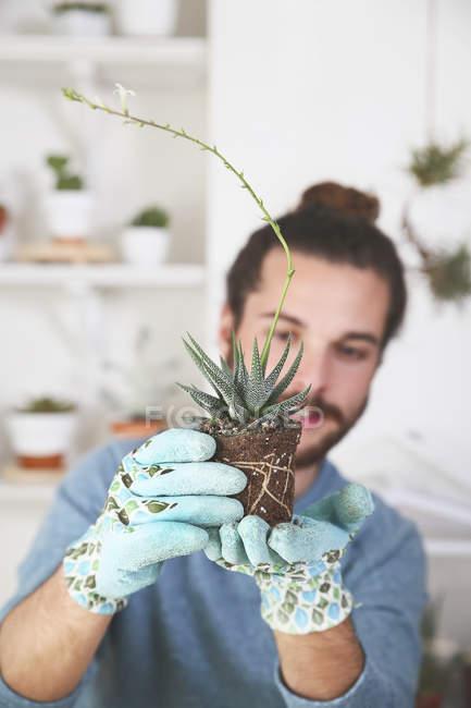 Junger Mann überprüfen die Wurzeln eine Sukkulente — Stockfoto