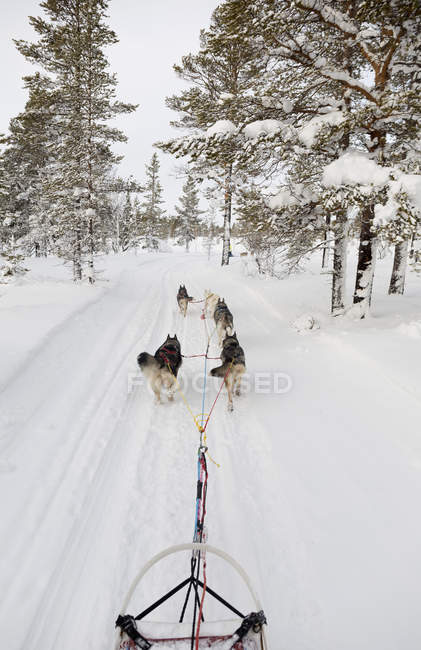 Husky sledge and dogs in winter — Stock Photo