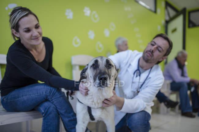 Ветеринар та жінка заспокійливий собака — стокове фото