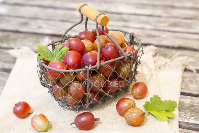 Wire basket of red gooseberries — Stock Photo