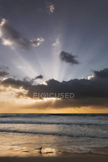 Australie, plage au lever du soleil — Photo de stock
