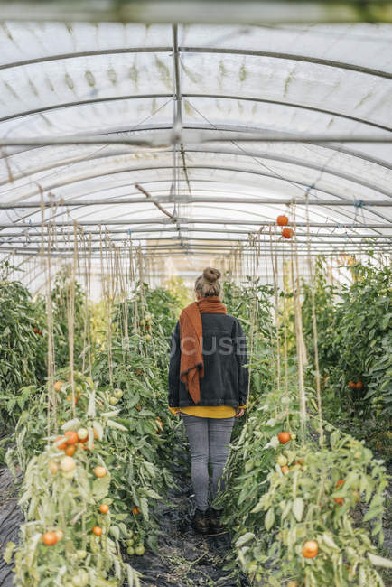 Young woman in greenhouse with tomato plants — Stock Photo