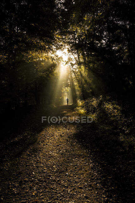 Germany, Hesse, Jogger running in Russelskeim city forest — Stock Photo