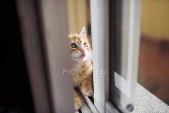 Gatito sentado dentro del doble vidrio de la ventana y mirando hacia arriba - foto de stock