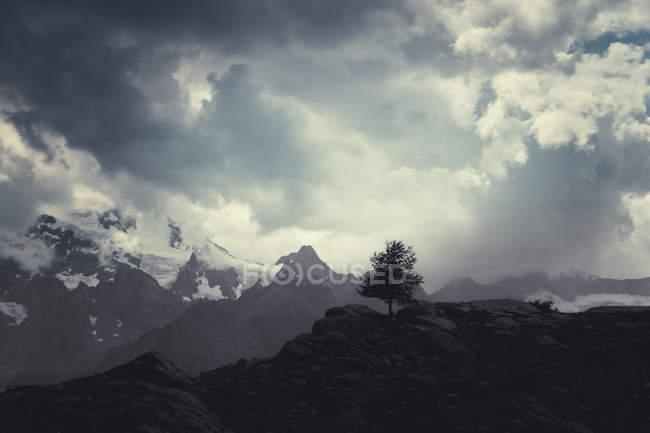 Єдине дерево на пагорбі в італійських Альпах, a Lanzada, Італія — стокове фото