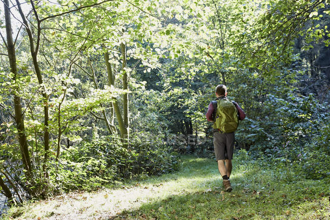 Male hiker with backpack walking in forest — Stock Photo