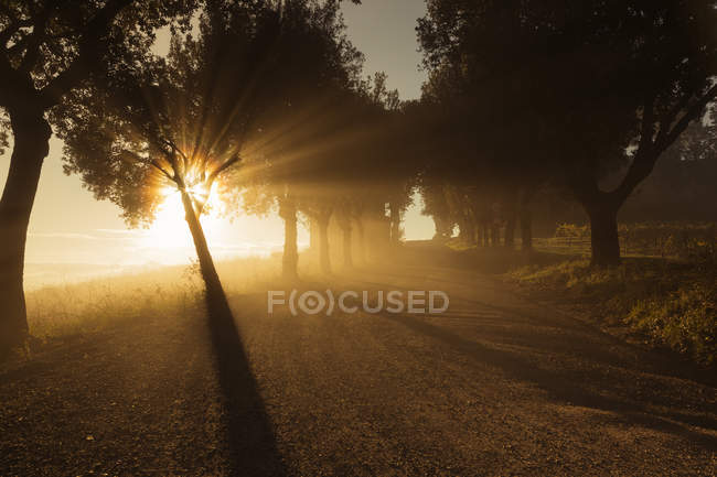 Italy, Tuscany, Val d'Orcia, tree-lined road in morning fog — Stock Photo