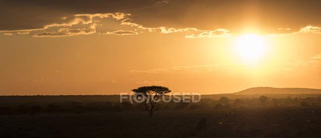 Namibie, région de Kunene, coucher de soleil sur le champ — Photo de stock