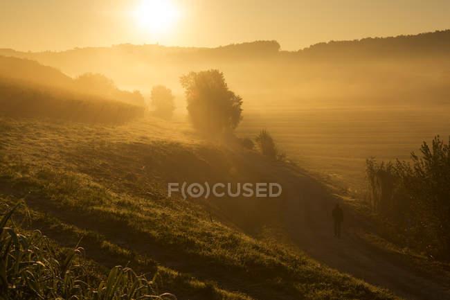 Италия, Тоскана, человек, гуляющий на природе на восходе солнца вблизи Лукки — стоковое фото