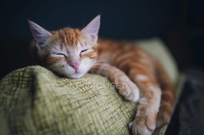 Relaxing ginger kitten lying on sofa — Stock Photo
