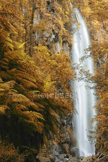 Bosque de laurel, España - foto de stock