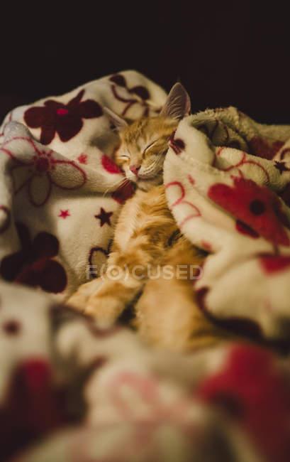 Рыжий котенок, спать на красочные одеяло на дому — стоковое фото