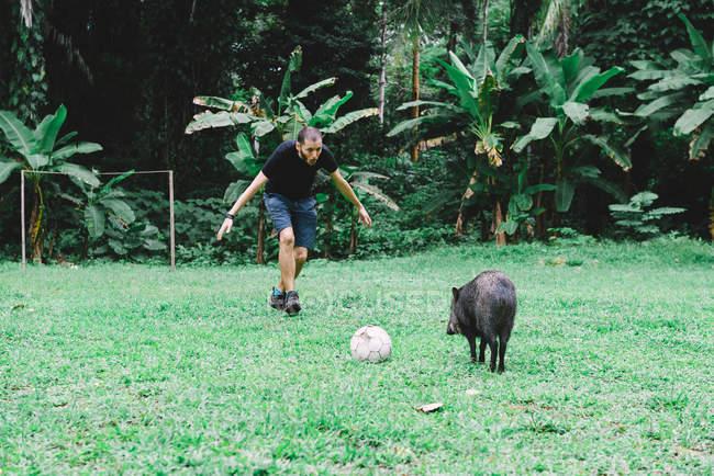 Peru, Man playing football with a peccary — Stock Photo