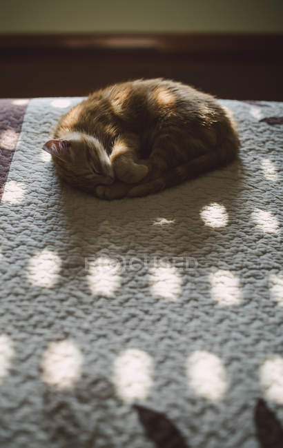 Ginger kitten relaxing and sleeping on bed in sunny morning — Stock Photo