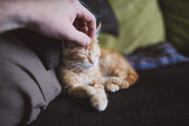 Close-up of human hand stroking ginger kitten — Stock Photo