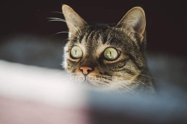 Close-up of amazed tabby cat looking sideways on dark background — Stock Photo