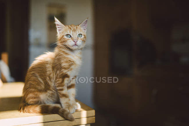 Ginger kitten sitting on kitchen table at home — Stock Photo